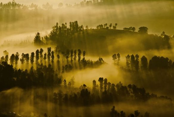 Dawn over the Nilgiri Tea Gardens